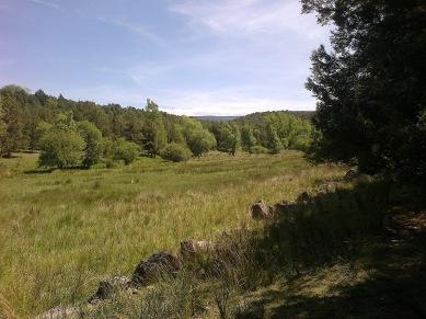 Praderas próximas al río Caslilla, Segovia-01