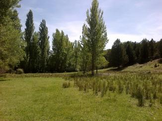 Praderas próximas al río Caslilla, Segovia-02