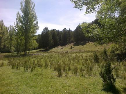 Praderas próximas al río Caslilla, Segovia-03