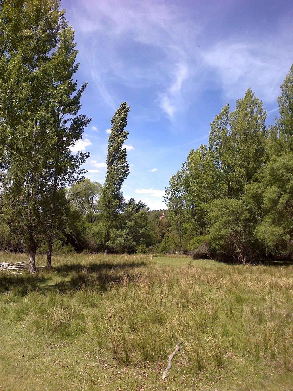 Bosques del río Caslilla-3
