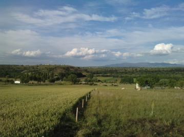 Monte de Los Cortos campiña 5