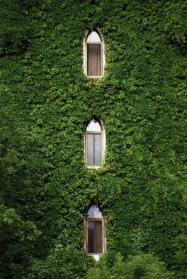 Bindweed tower windows