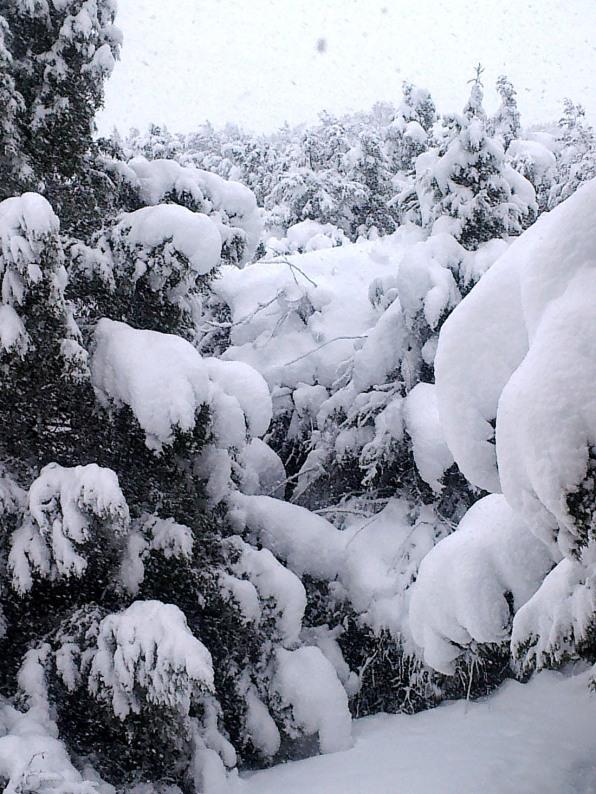 El Monte de Los Cortos - Febrero 2018