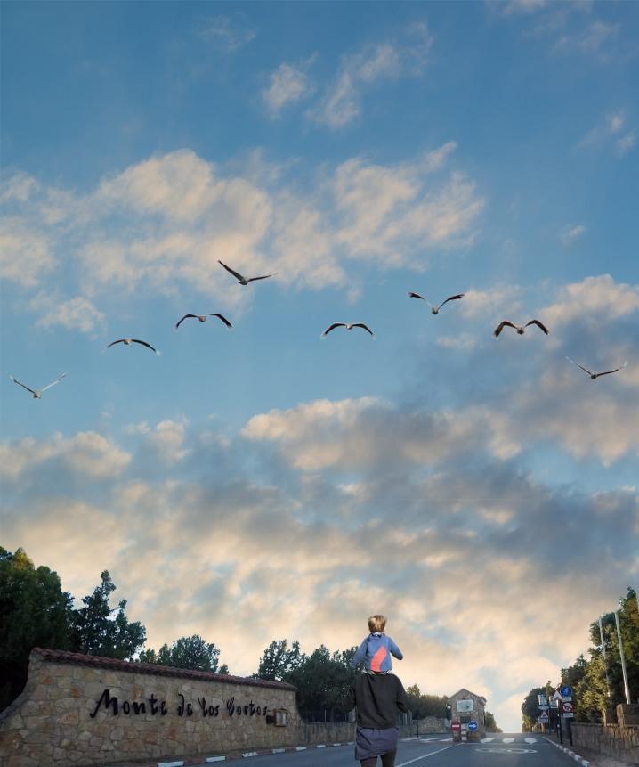 Birds on transit - Monte de Los Cortos