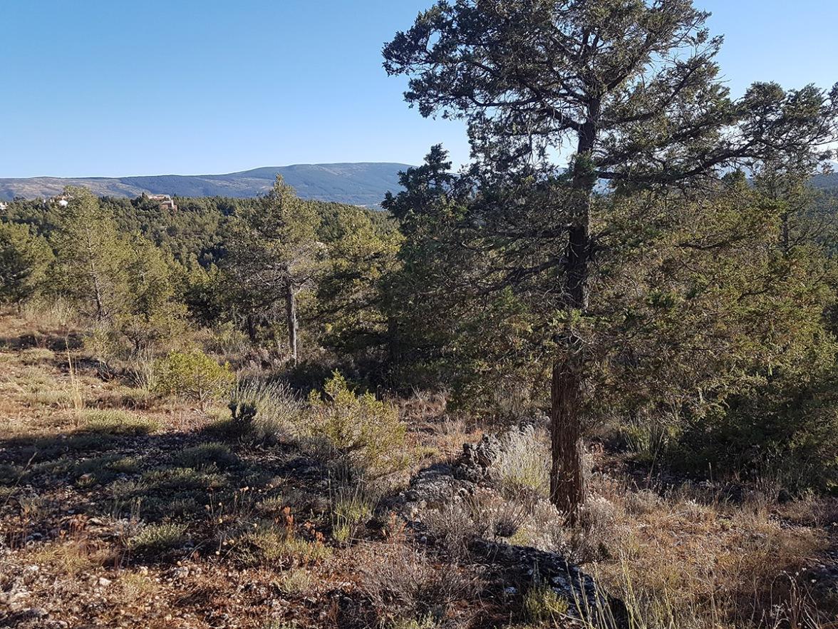El Monte de Los Cortos - Chalet 115